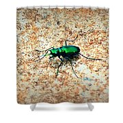 Green Tiger Beetle Shower Curtain