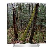 Green Timber Shower Curtain