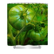 Green Tomatos Shower Curtain