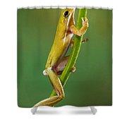Green Tree Frog Climbing Shower Curtain