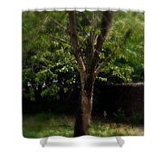 Green Tree In Park Shower Curtain