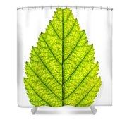 Green Tree Leaf Shower Curtain by Elena Elisseeva