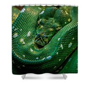 Green Tree Python Curled Shower Curtain