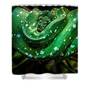 Green Tree Python Shower Curtain