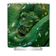 green tree python Macro Shower Curtain