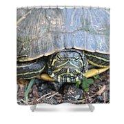 Green Turtle Shower Curtain