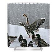 Green Valley Ducks Shower Curtain