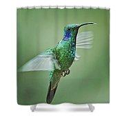Green Violetear Hummer Beauty Shower Curtain