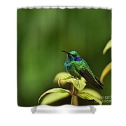 Green Violetear Hummingbird Shower Curtain
