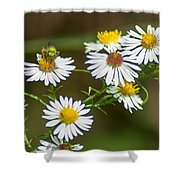 Green Wasp And Daisies Shower Curtain