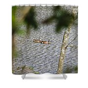 Green Winged Teal 2 Shower Curtain