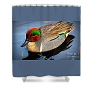 Green Winged Teal  Duck  Shower Curtain