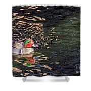 Green-winged Teal Shower Curtain