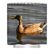 Green Winged Teal Shower Curtain