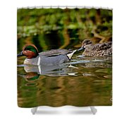 Green-winged Teal Pair Shower Curtain