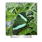 Green Wings 2 Shower Curtain