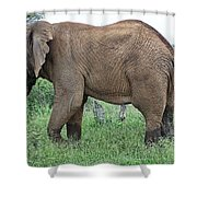 Greener Pastures-after The Rains Shower Curtain
