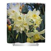 Greenhouse Daffodils Shower Curtain