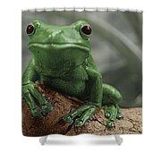 Greeny 4 Shower Curtain