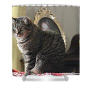 Greeting Card Cat Shower Curtain