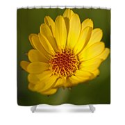 Greeting The Morning Sun Shower Curtain