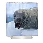 Greetings From Antarctica.. Shower Curtain