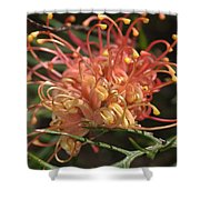 Grevillea  Superb Shower Curtain