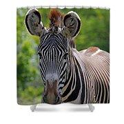 Grevy Zebra Shower Curtain