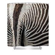 Grevy's Zebra 5 Shower Curtain