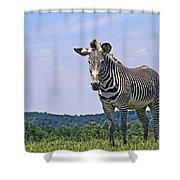 Grevy's Zebra Shower Curtain