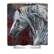 Grey Andalusian Horse Oil Painting 2013 11 26 Shower Curtain