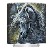 Grey Arabian Horse Oil Painting 2 Shower Curtain