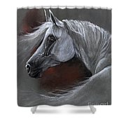 Grey Arabian Horse Soft Pastel Drawing 13 04 2013 Shower Curtain