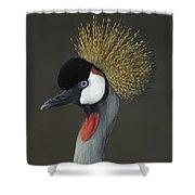 Grey Crowned Crane Portrait Shower Curtain