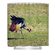 Grey Crowned Crane. The National Bird Of Uganda Shower Curtain