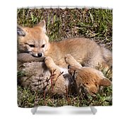 Grey Fox Kitts At Play Shower Curtain