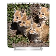 Grey Foxes At Den Shower Curtain