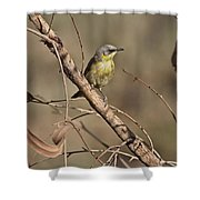Grey- Headed Honeyeater Shower Curtain