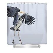 Grey Heron Landing Germany Shower Curtain