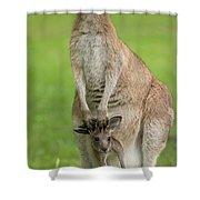 Grey Kangaroo And Joey  Shower Curtain