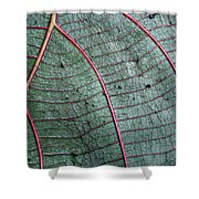 Grey Leaf With Purple Veins 2 Shower Curtain