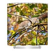 Grey Squirrel - Impressions Shower Curtain
