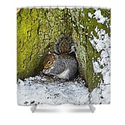 Grey Squirrel With Its Food Store Shower Curtain