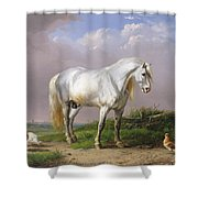 Grey Stallion Shower Curtain