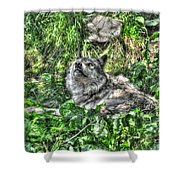 Grey Wolf Dreaming Shower Curtain