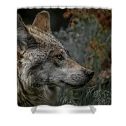 Grey Wolf Profile 3 Shower Curtain