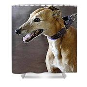 Greyhound Dog Shower Curtain