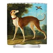 Greyhound In A Landscape Shower Curtain