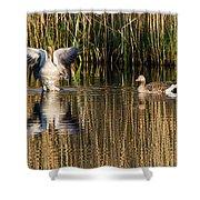 Greylag Goose Family Shower Curtain