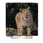 G&r.grambo Mm-00006-00275, Bobcat On Shower Curtain by Rebecca Grambo